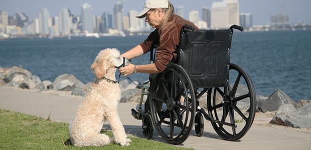 Wheelchair Accessories | Silver Cross®